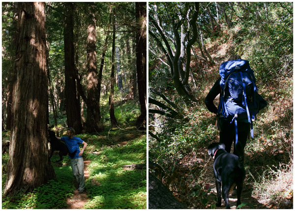 Camping in Big Sur - a peaceful hike in Los Padres
