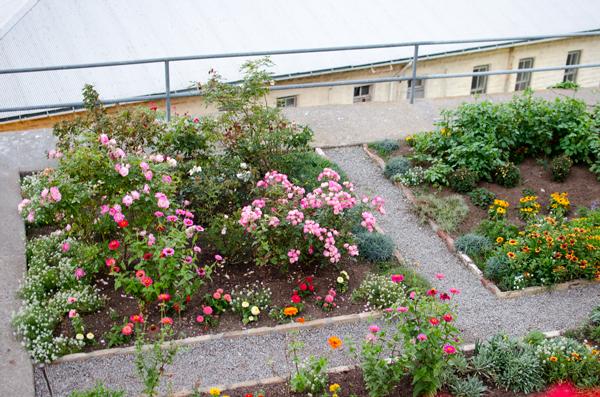 Gardens and Everyday Life on Alcatraz