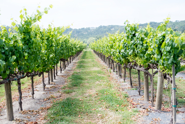 Where to go for California Wine Country // Sonoma Guide