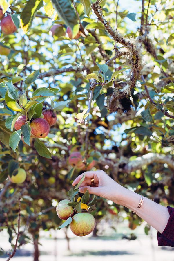 Fall Apple Recipes - Apple Cream Cheese Hand Pies