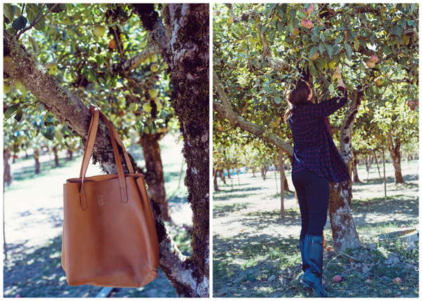 Apple Picking in San Francisco Bay Area