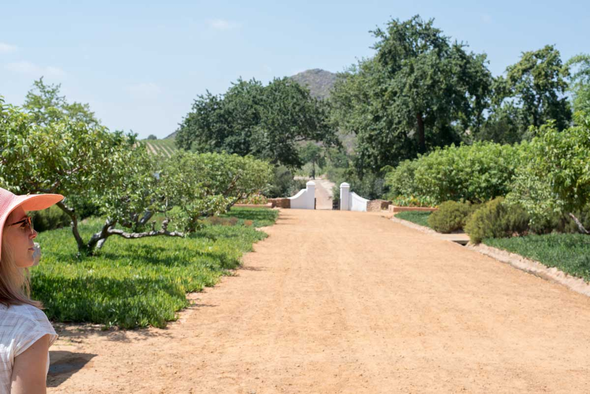 Best Things to Do Stellenbosch Wine Country