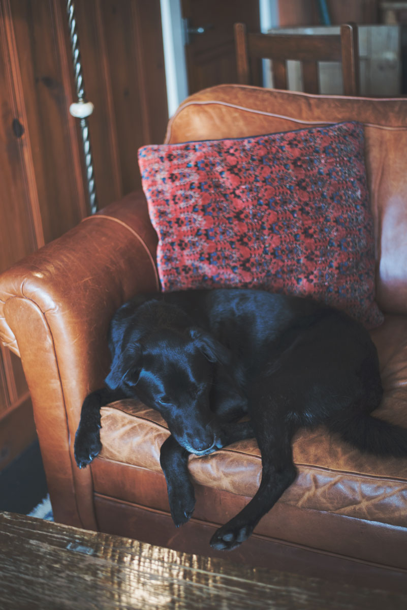 Best Dog Friendly Hotels San Francisco and Northern California